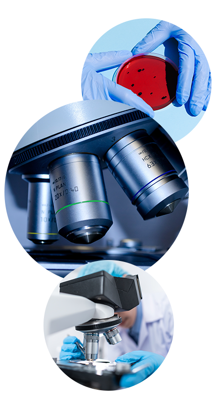 microscopy and imaging facility, R&D of scientific research